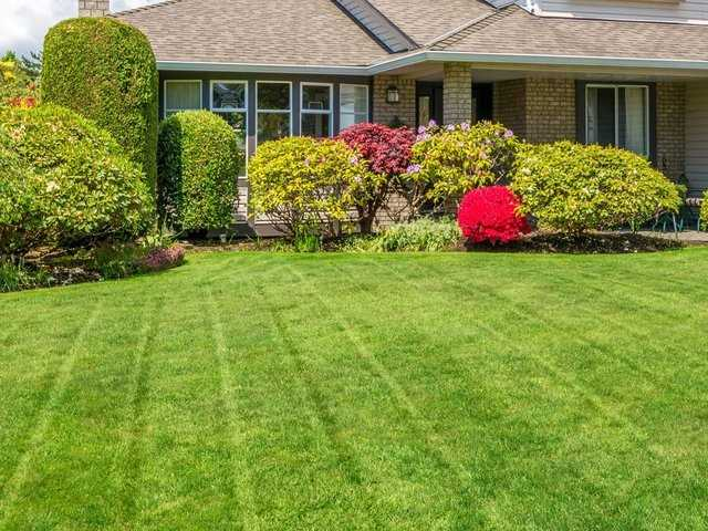Green Lawn Care That Is Chemical Free